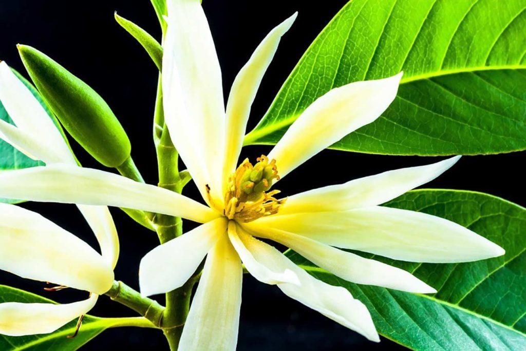 plant sfeprocess vanilla